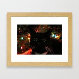 Bokeh Kitty Photo Framed Art Print