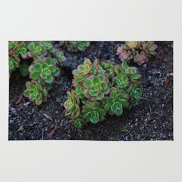 Succulent cactus green flowers red finished a lot of Rug