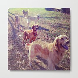 Vintage golden retriever dogs lined up Metal Print