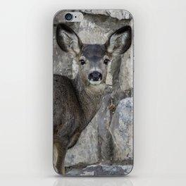 Young Mule Deer iPhone Skin