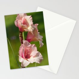 Pale Pink Gladiolas Stationery Cards