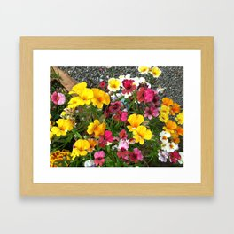 Colorful Nemesia Framed Art Print