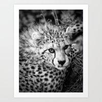cheetah Art Prints featuring Cheetah by Mark Nelson