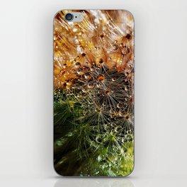 Dewdrops On Dandelion Closeup iPhone Skin