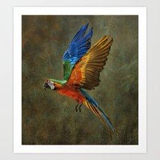 A Flying Rainbow Art Print