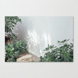 Succulents & Shadows Canvas Print