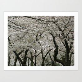 """""""Crab Apple and Sakura"""" Art Print"""
