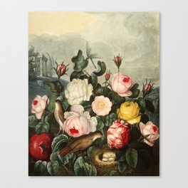 Pink  Red Floral : New Illustration Of The Sexual System Canvas Print