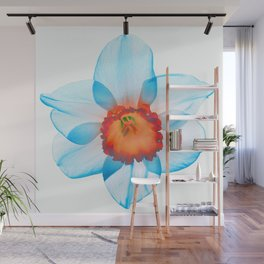 narcissus poeticus (feeling turquoise) Wall Mural