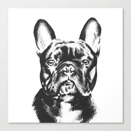 Black And White French Bulldog Sketch Canvas Print
