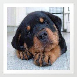 Riley  🐾  The Rottweiler Puppy  🐾 Art Print