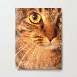 Close-up Cat Metal Print