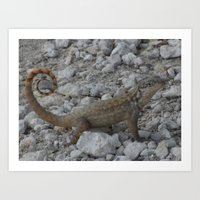 Florida Lizard Art Print