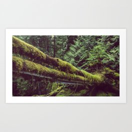 The Emerald Forest II Art Print