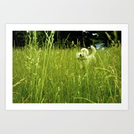 Wild White and Free Art Print