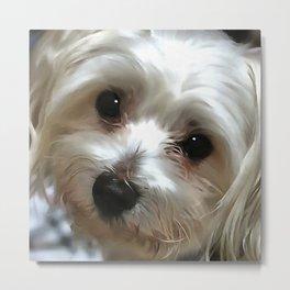 White Haired Street Dog Portrait Metal Print