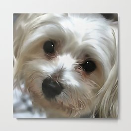 White Haired Street Dog Portrait Metal Print