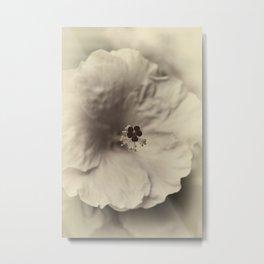 Hibiscus Flower Macro Sepia Botanical Metal Print