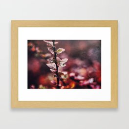 Enchanting Framed Art Print