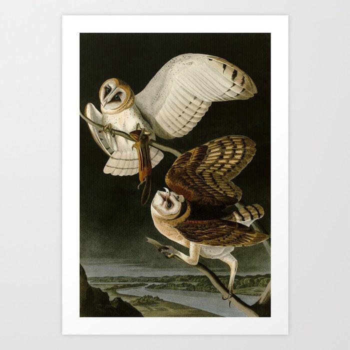 Barn Owl - Vintage Bird Illustration Art Print