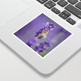 Lavender Bee Sticker