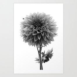 Dahlia - Monochrome Art Print