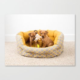 Two Small Dog Mixed Breed Puppies Canvas Print