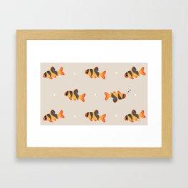 Clown loach Framed Art Print