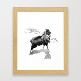 Tahr / Thar Framed Art Print