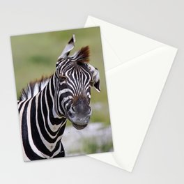 Shaking Zebra, Africa wildlife Stationery Cards