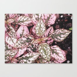 Green veined pink leaves Canvas Print