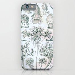 Vintage Print - Haeckel - Art Forms of Nature (1904): Ciliata iPhone Case