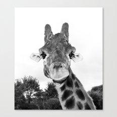 Giraffe. B+W. Canvas Print