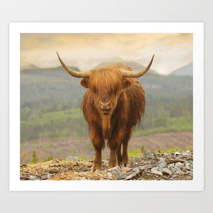 Highland Moo Art Print
