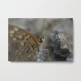 Macro Butterfly Eye Metal Print