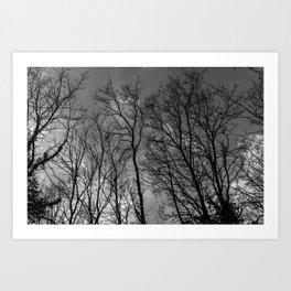 Black and white high naked trees Art Print
