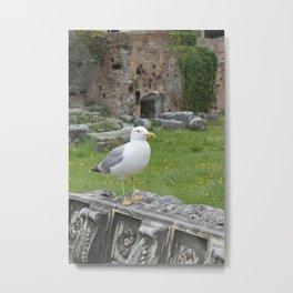 Seagull. Metal Print