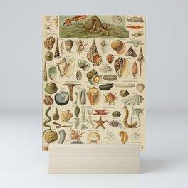Vintage sealife and seashell illustration Mini Art Print