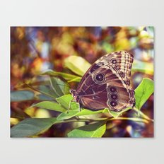 On the Fringes of a Rainbow Canvas Print