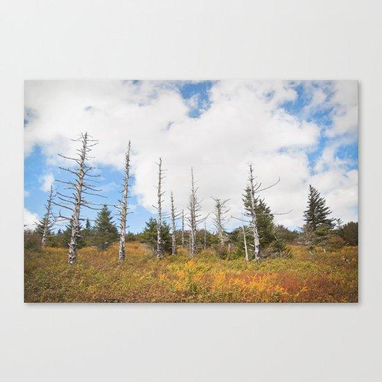 Trees in Mt. Rogers, Virginia Canvas Print