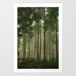 Pines 05/10 Art Print