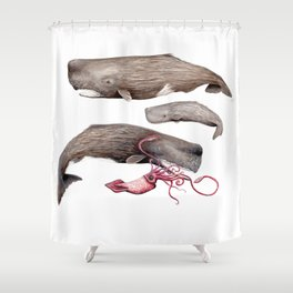 Sperm whale family Shower Curtain