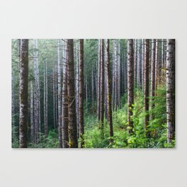 Trees: II // Oregon Canvas Print