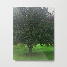 Apple Tree With Red Ripe Apples Metal Print