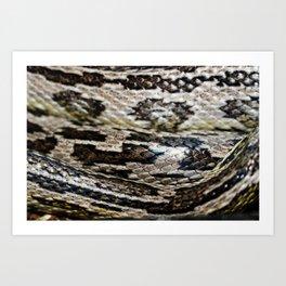 beautiful snake skin, corn snake Art Print