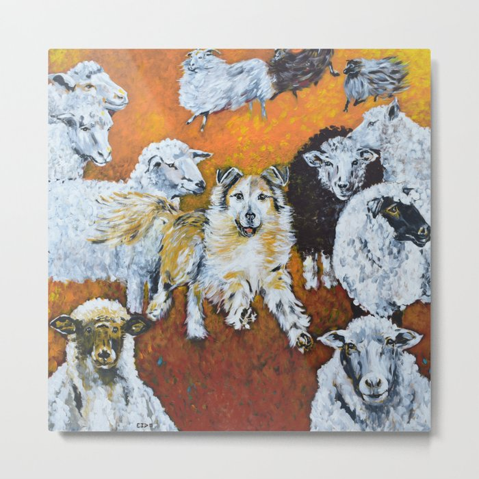 My Dog, the Border Collie and Sheep Metal Print