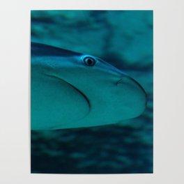 Dangerous Waters Poster