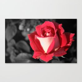 Fall Rose Canvas Print