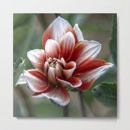 Unfurling flower Metal Print