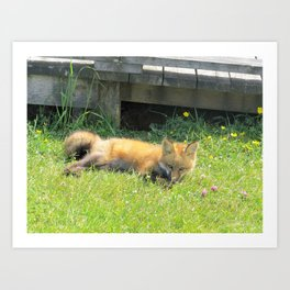 YOUNG RED FOX RELAXING Art Print